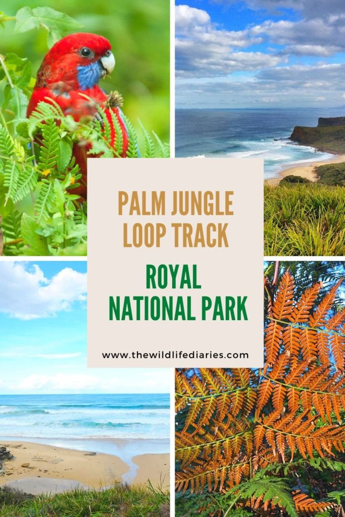 Palm Jungle Loop Track in Royal National Park