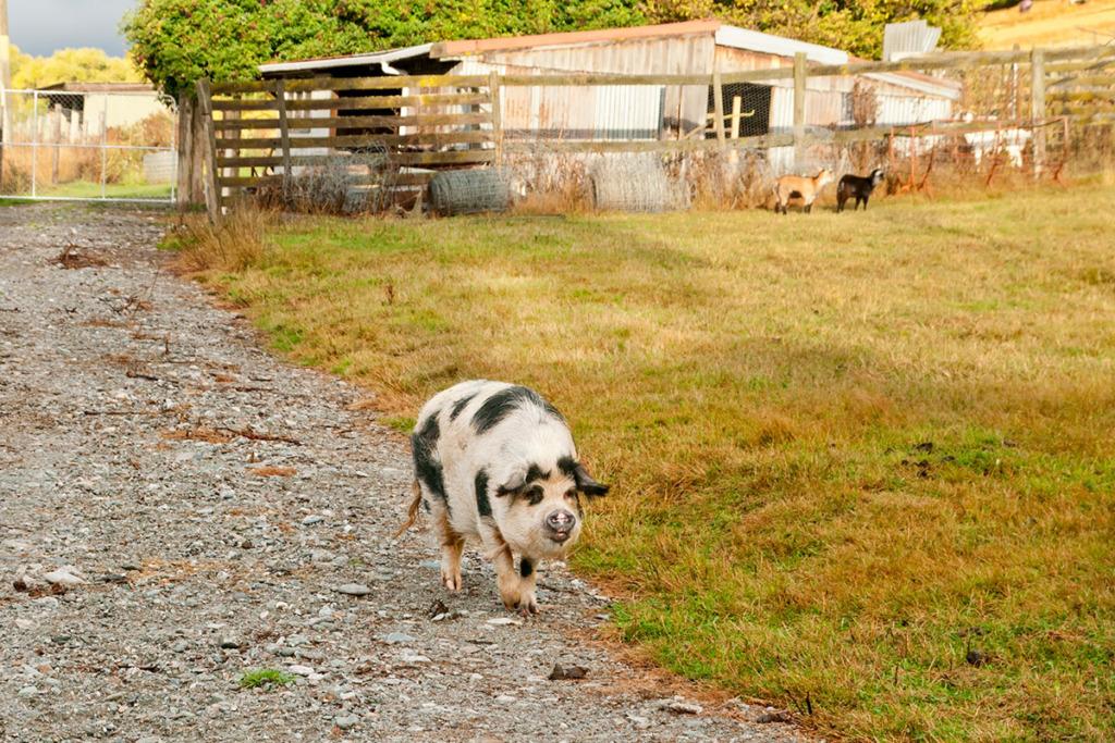 vet paddock in Arrowtown