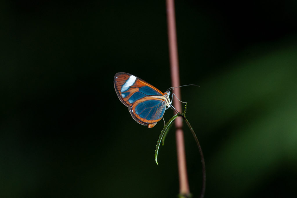 Butterfly in Monteverde