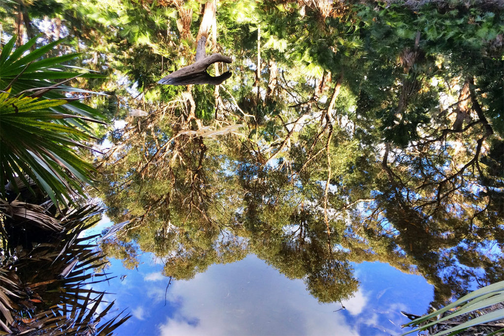 Reflections in the forest pool