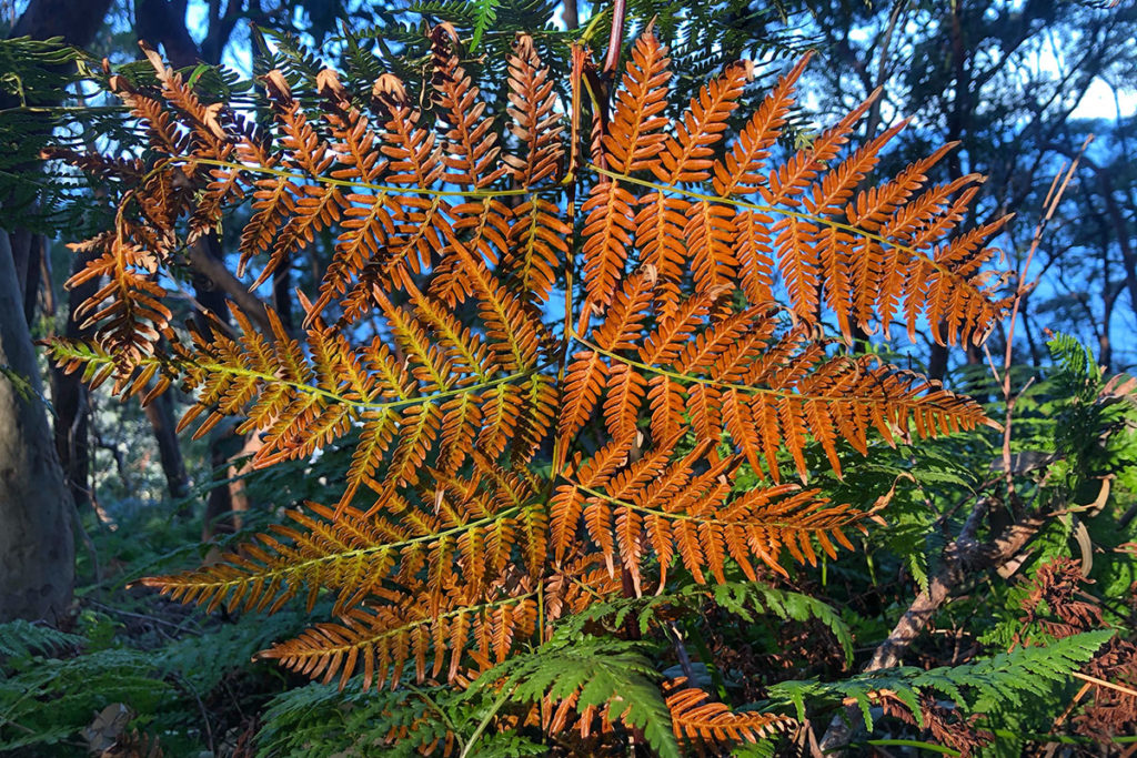 Multicolored fern