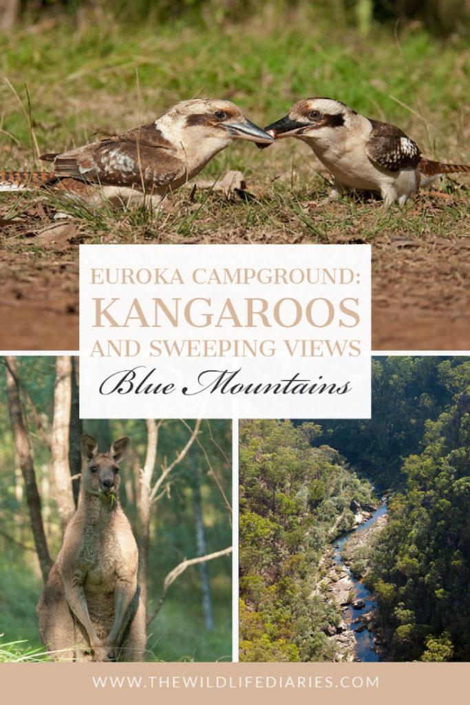 Euroka campground wildilfe and views