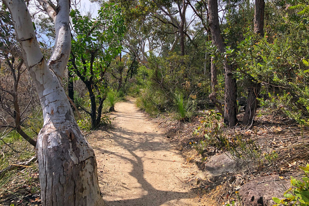 Karloo track in Royal National Park