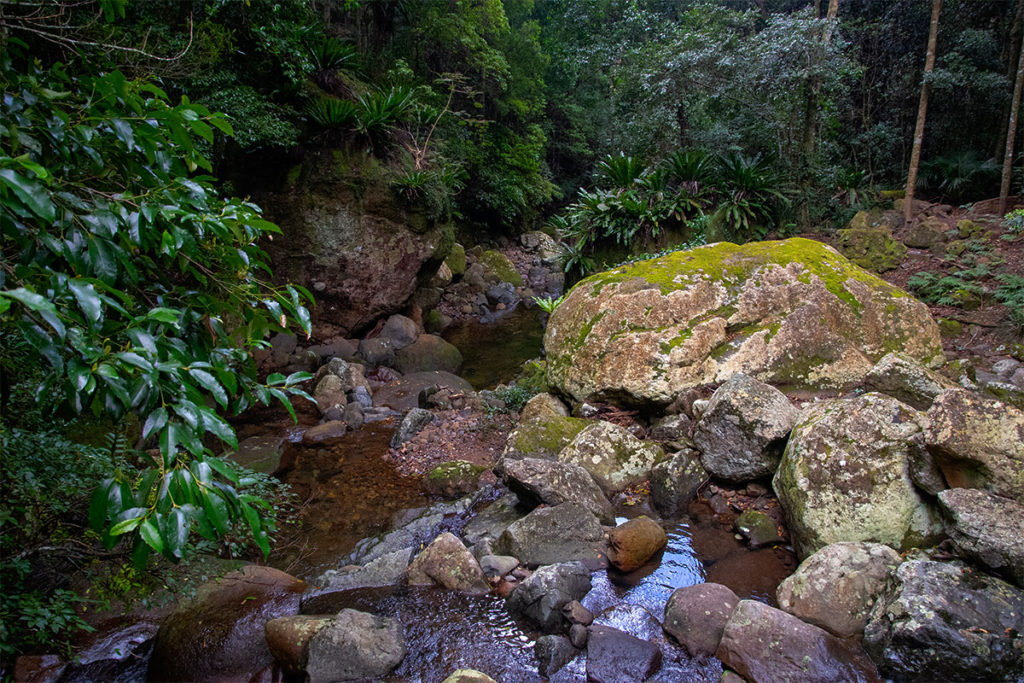 Rainforest creek in Minnamurra rainforest
