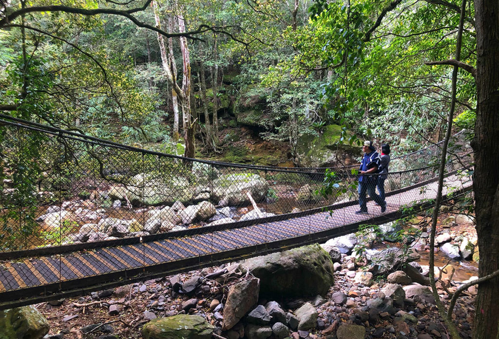 Canopy bridge in Minnamurra rainfores