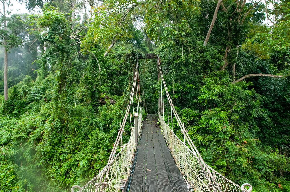 suspension bridge over segama river