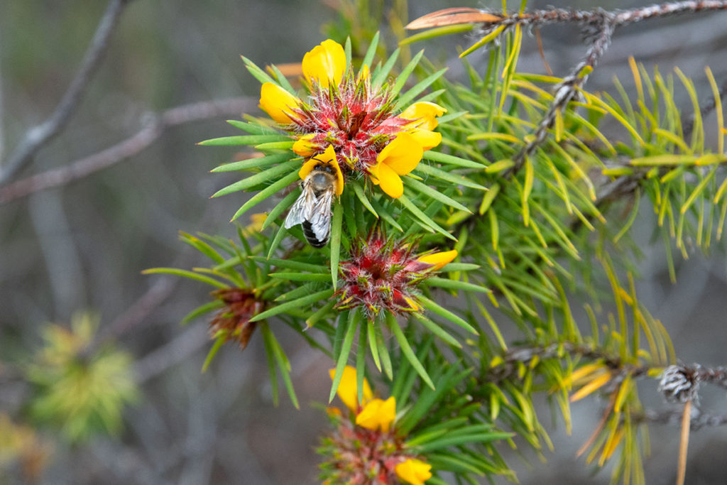 Wildflowers on Uloola track