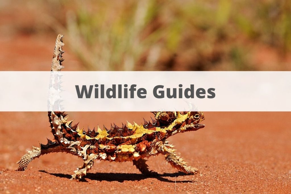 Wildlife guides