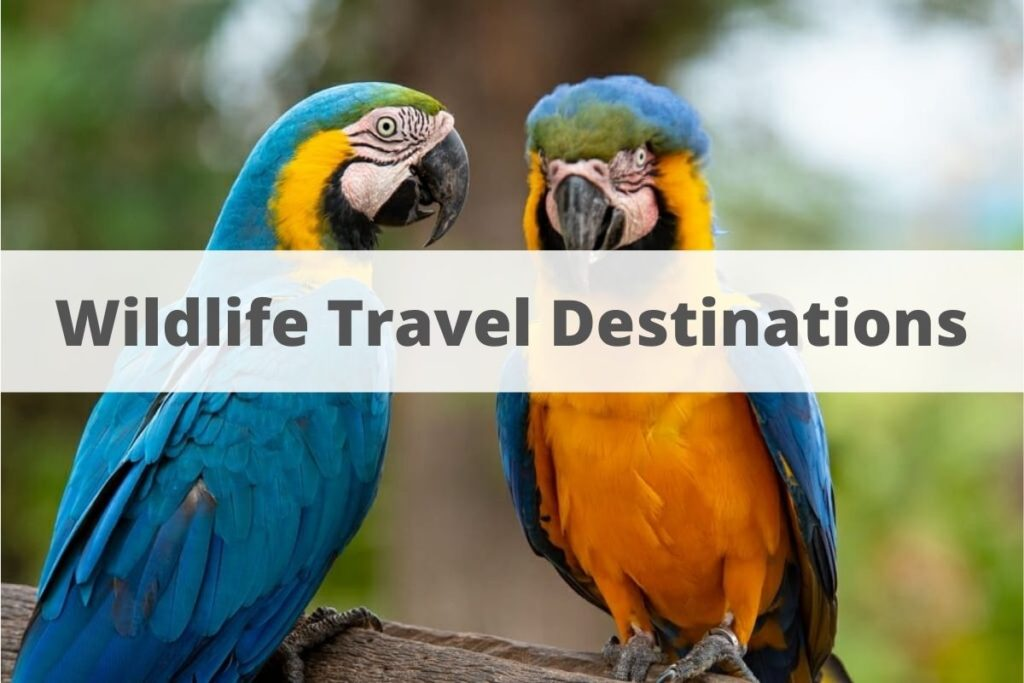Wildlife Travel Destinations