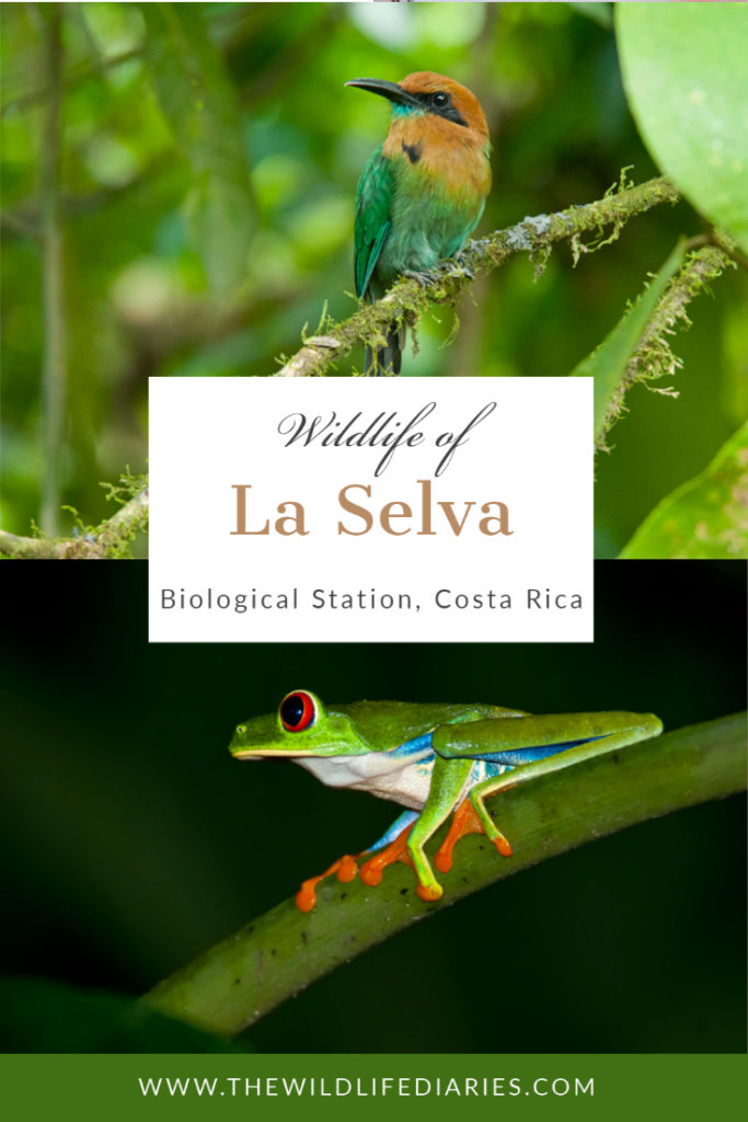 Wildlife of La Selva Biological Station