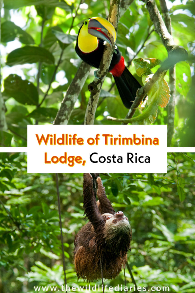 Wildlife of Tirimbina