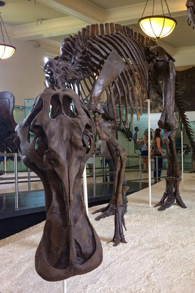 Anatotitan - Duck-billed Dinosaur