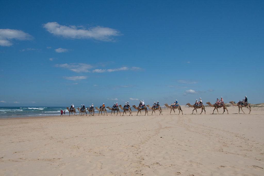 Riding a camel through Port Stephens dunes