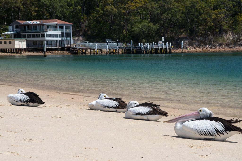 Little beach in Port Stephens