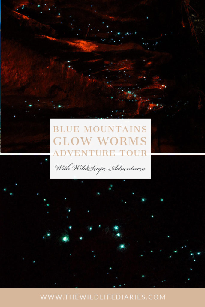 Blue Mountains Glow Worm Adventure with WildScape Adventures