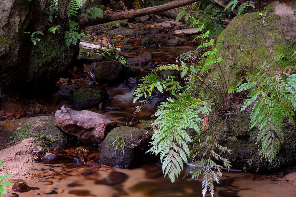 Creek on the bottom of the Grand Canyon, Blue Mountains