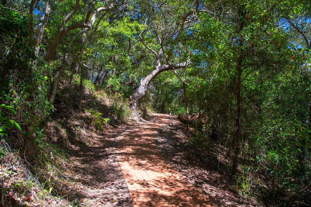 Mount Tomaree Summit walk trail