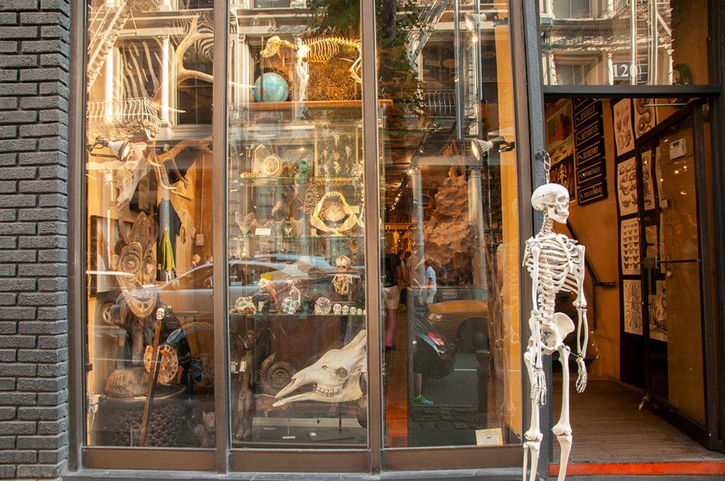 The Evolution Store New York