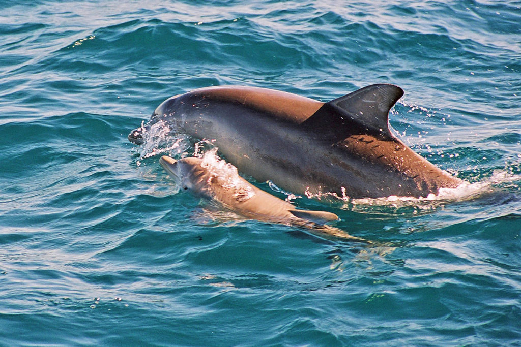 Dolphins in Port Stephens