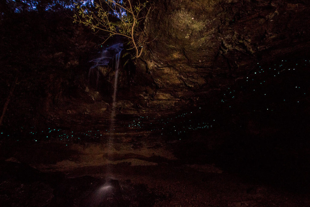 Glow worms in Blue Mountains