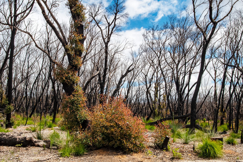 Forest returning to life after fires