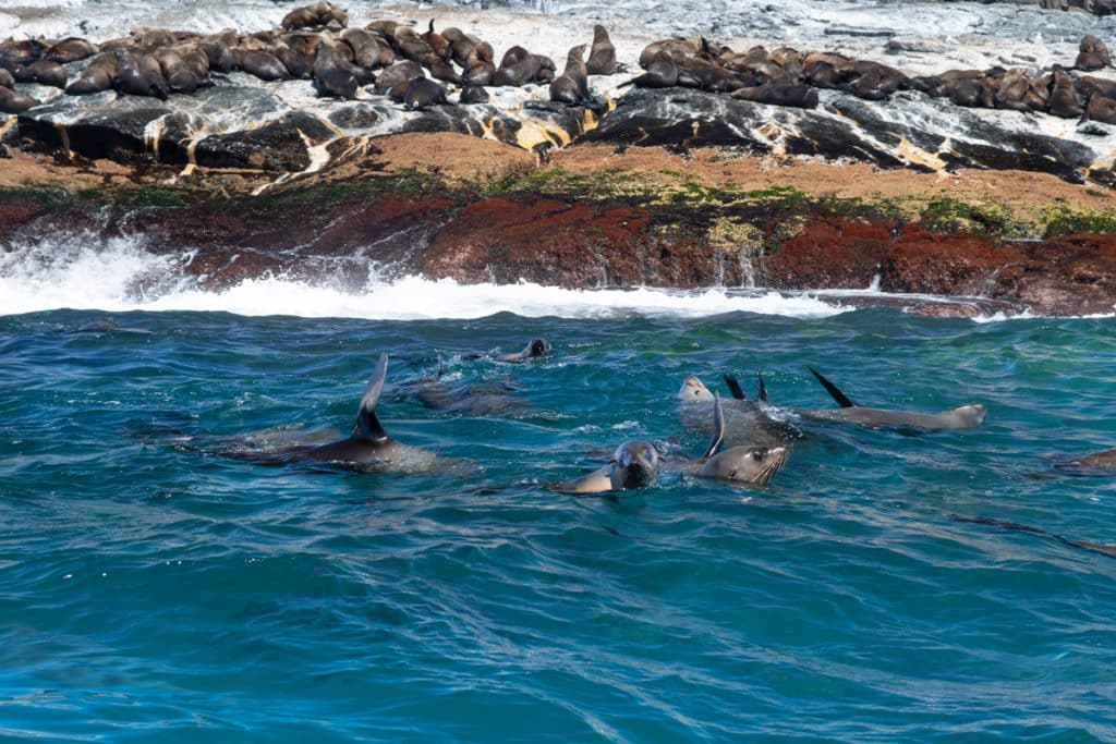 Swimming with seals in Narooma