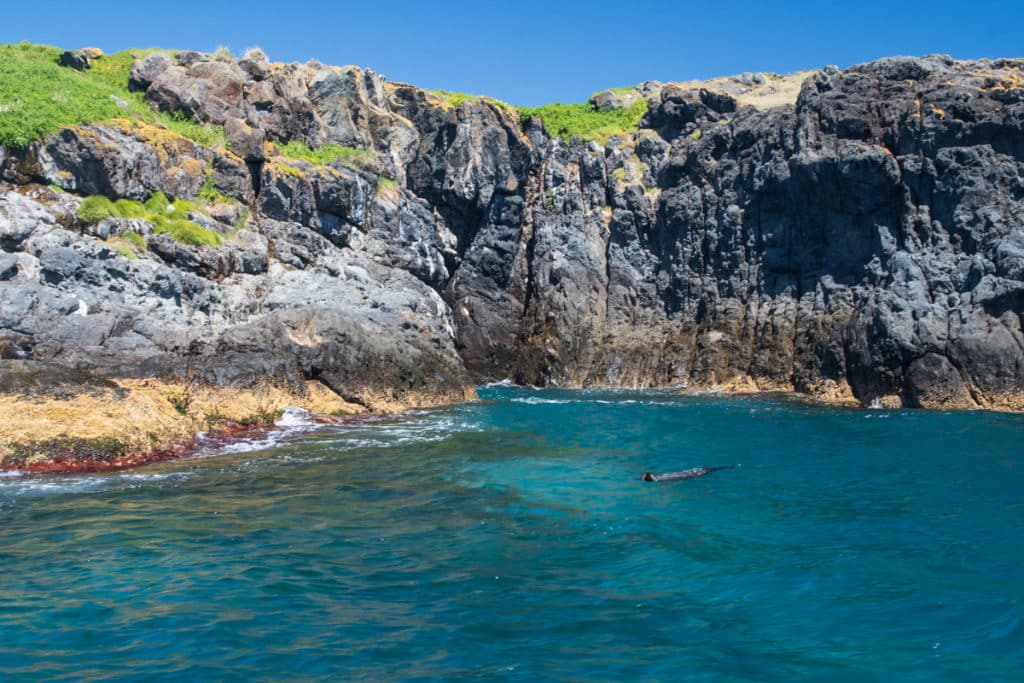 Swimming with seals in Narooma at Montague island