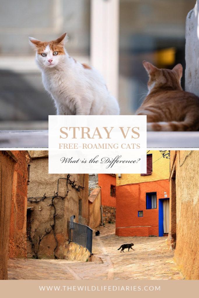 Stray vs free-roaming cats