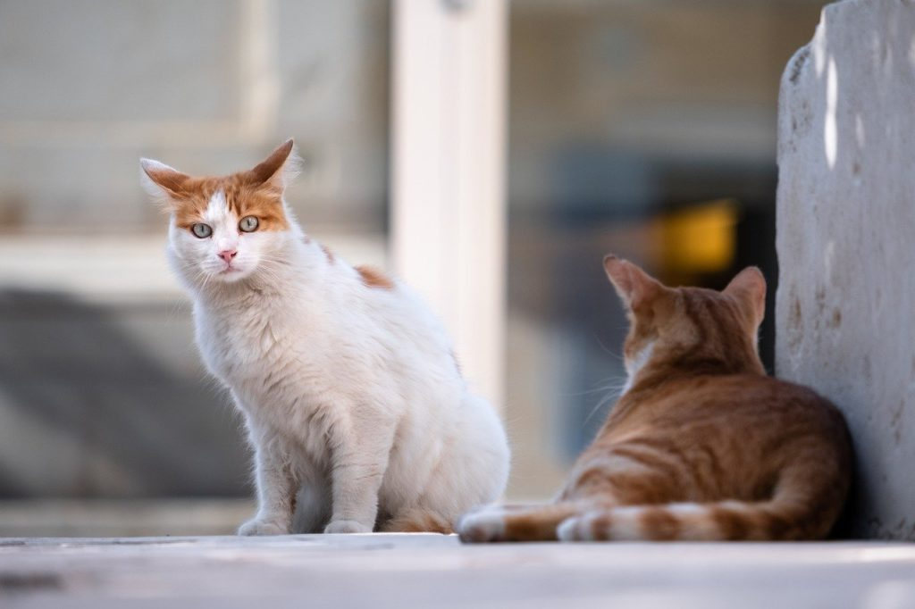Free-roaming cats in the city