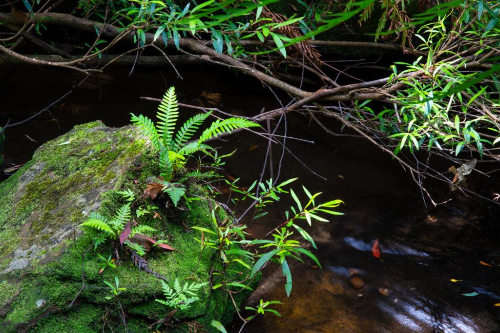 Cataract creek lawson