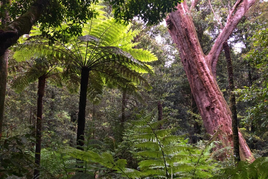 Cathedral of ferns rainforest