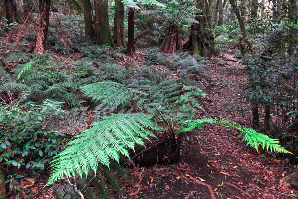 Fern in cathedral of ferns