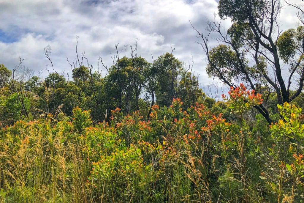Curra Moors trail in Royal National Park