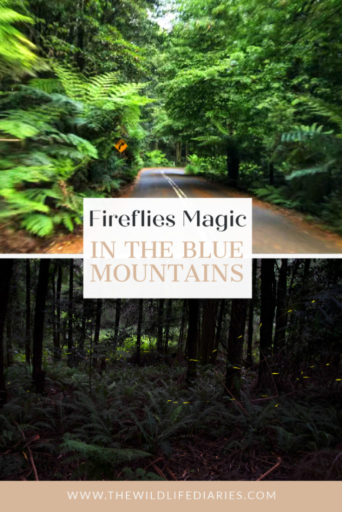 Fireflies in the Blue Mountains