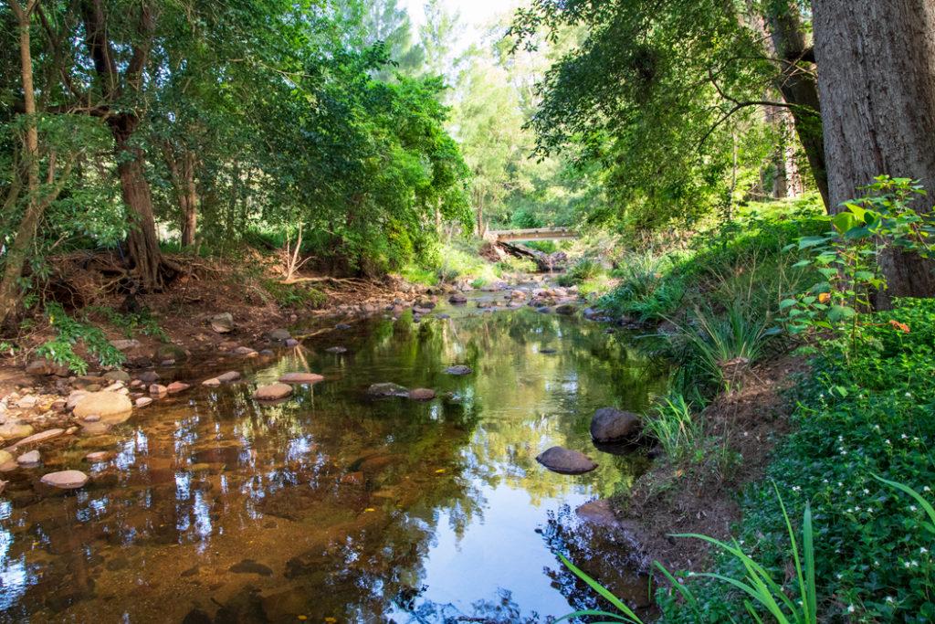 Forest stream in Kangaroo Valley