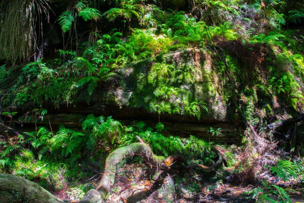 Moss covered rocks along South Lawson Waterfall Circuit Walk
