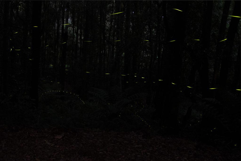 Fireflies blue mountains
