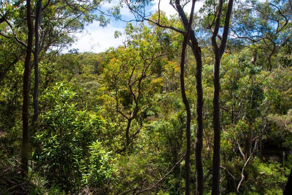 View along South Lawson Waterfall Circuit