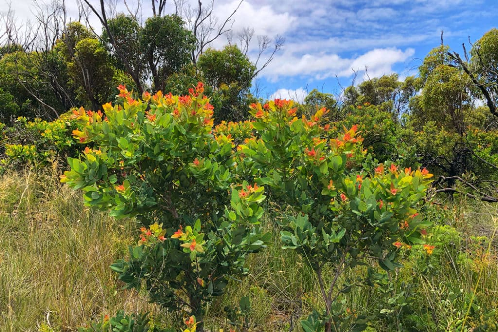 Colorful bush along curra moors trail