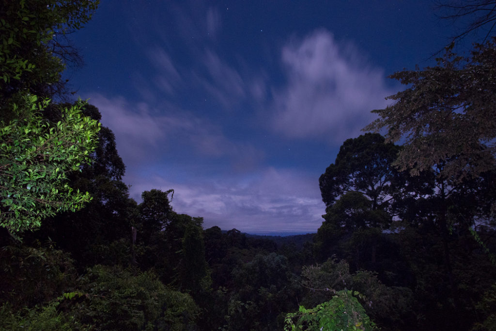 Tropical night in Deramakot Forest Reserve