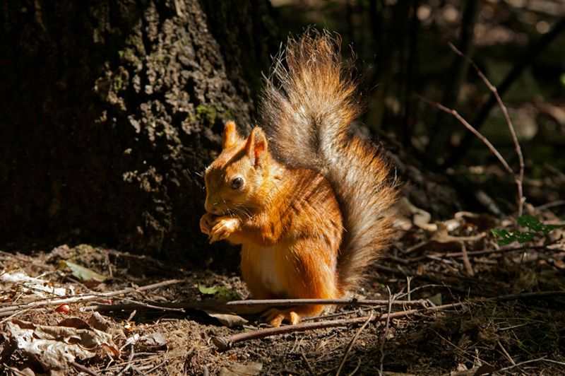 red-squirrel-2-20-as-smart-object-2.jpg
