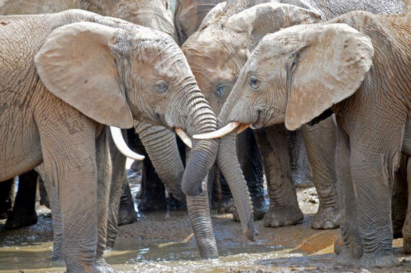 elephants-2.jpg