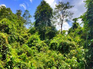 Vegetation at Kinabatangan River