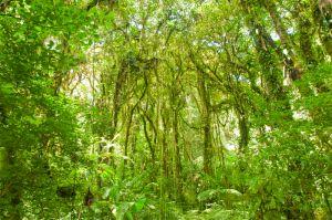 Cloud forest, Monteverde National Park