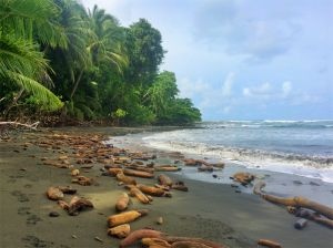 Driftwood beach at Puma Valley, Corcovado National Park